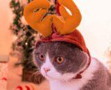 WMING Pet Antler Headband, Puppy Kitten Christmas Antler Hair Accessory Cute Headdress Dog Cat Clothing