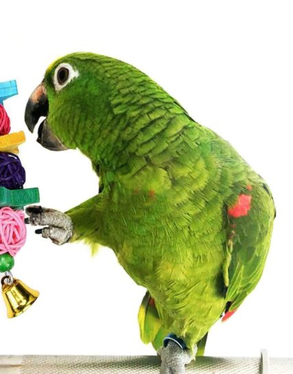 Trecynd 9 Packs Bird Toys Parrot Swing Toys, Chewing Toys Colorful Hanging Bell Pet Cage Toys Hammock bird perch stand Suitable for Small Parakeets, Conures, Love Birds, Cockatiels, Macaws, Finches