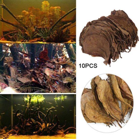 POFET 10pcs Catappa indian almond leaves ketapang leaf shrimp betta fish aquarium care Lower pH for Aquarium Fish Tank Use