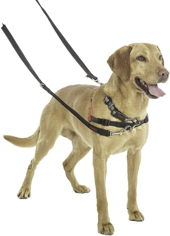 Halti Training Lead For Dogs, Double Ended Dog Training Lead for Halti Head Collar and No Pull Harness, Black Training Lead for Medium Dogs and Large Dogs, 14320B