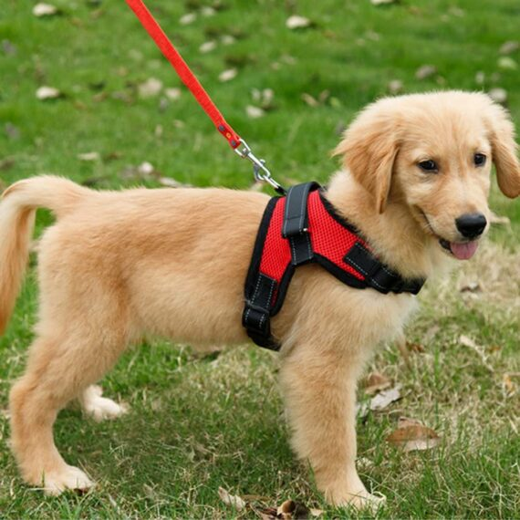FUNKEEN PET HOUSE No-Pull Padded Adjustable Puppy Dog Training Walking Soft Harness Vest (M, Red)