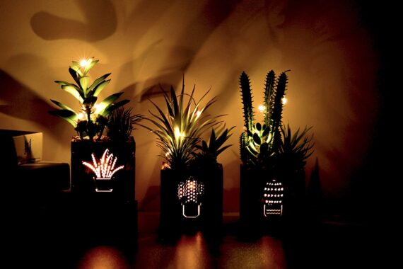 BEGONDIS Set of 3 Artificial Succulents with Led Lights in Wooden Box, Artificial Plants Plastic Fake Topiary for Home/Office Decorations, Table Centerpiece, Valentine's Day